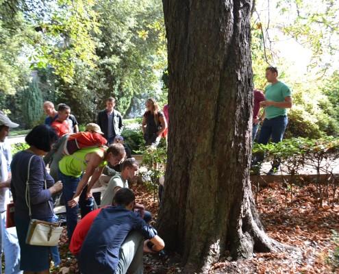 Арбористика, техника работы на деревьях